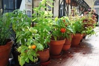 Városi veteményes: fűszerkert az ablakban | Tudatos Vásárló