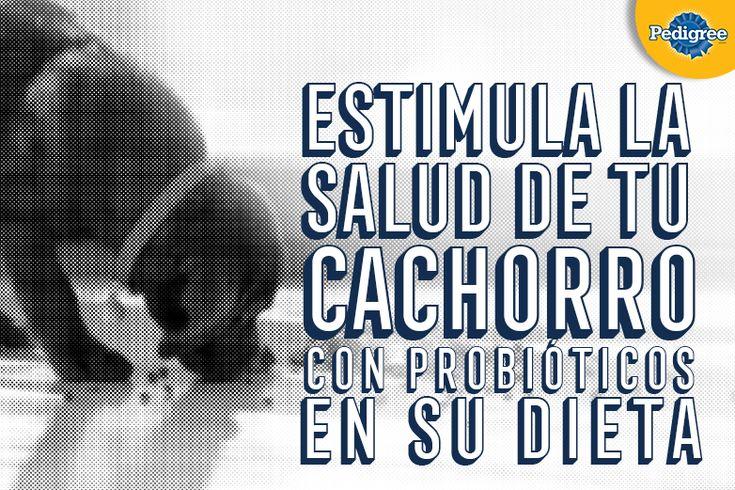 CiudadDeMascotas.com - alimento, accesorios perro gato