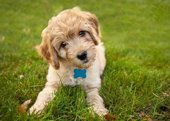 H Dog Names Best 25+ Dog na...