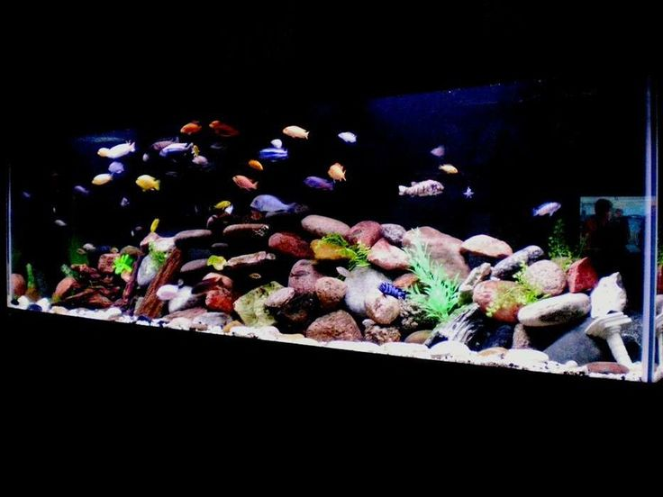 20 best bar counter fish tank ideas images on pinterest for African cichlid rock decoration