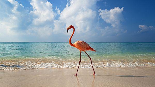 Flamingos Vögel kostenlose bilder (45 Fotos) für den Desktop, download hintergrundbilder