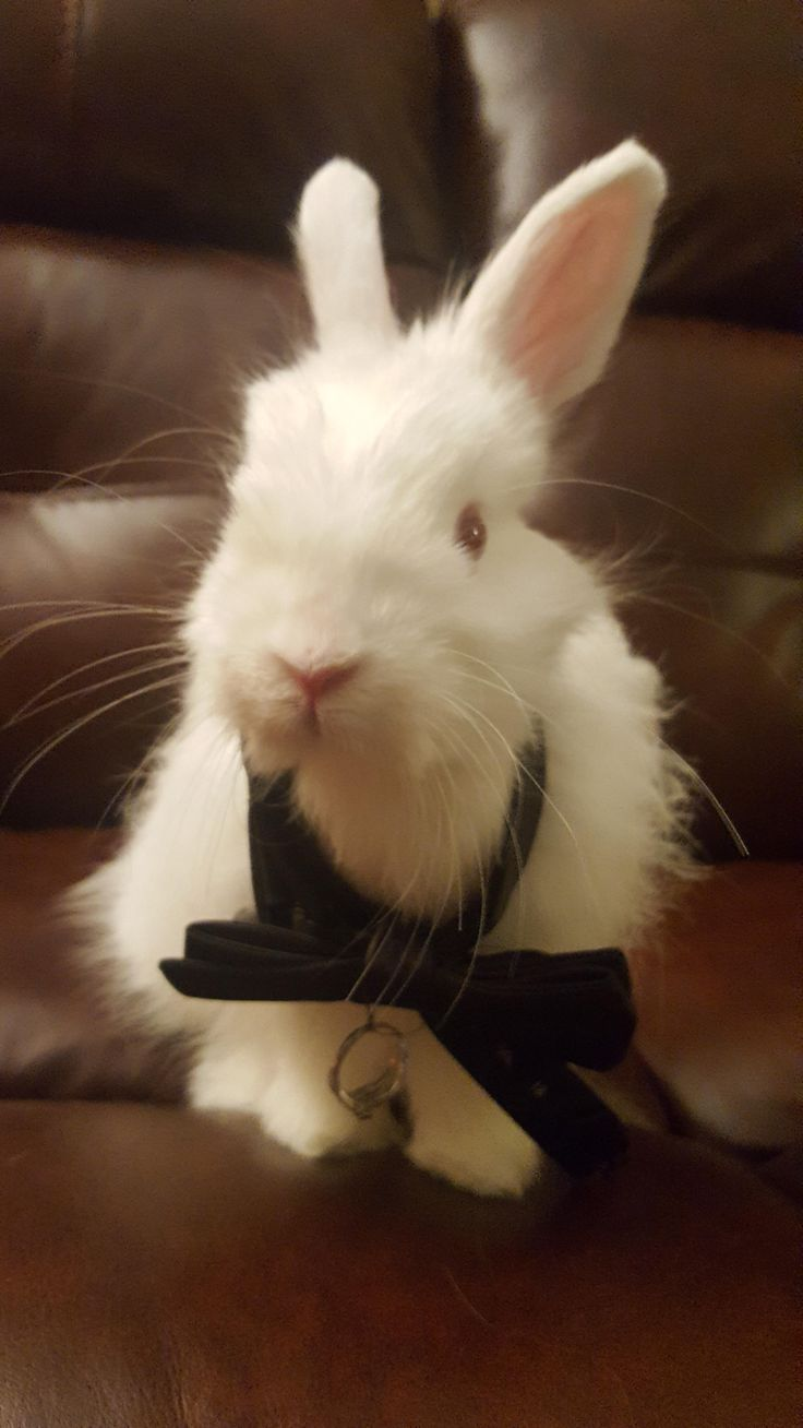 Issues You Want To Know Earlier than Shopping for A Rabbit