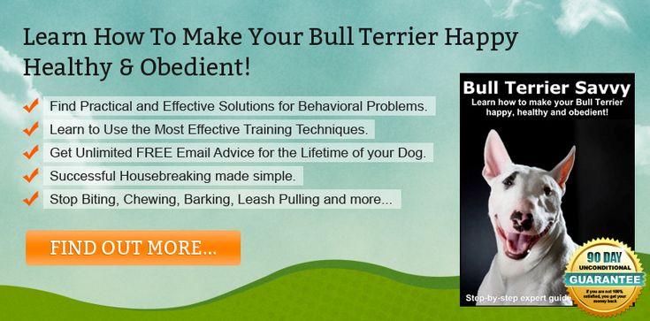Strategies for Effective Bull Terrier Training