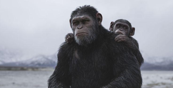 """Vierter Trailer zum Film Planet der Affen - Der letzte Teil der Trilogie """"Planet der Affen"""" kommt am 3. August in die deutschen Kinos. Pointer zeigt dir den vierten Trailer."""