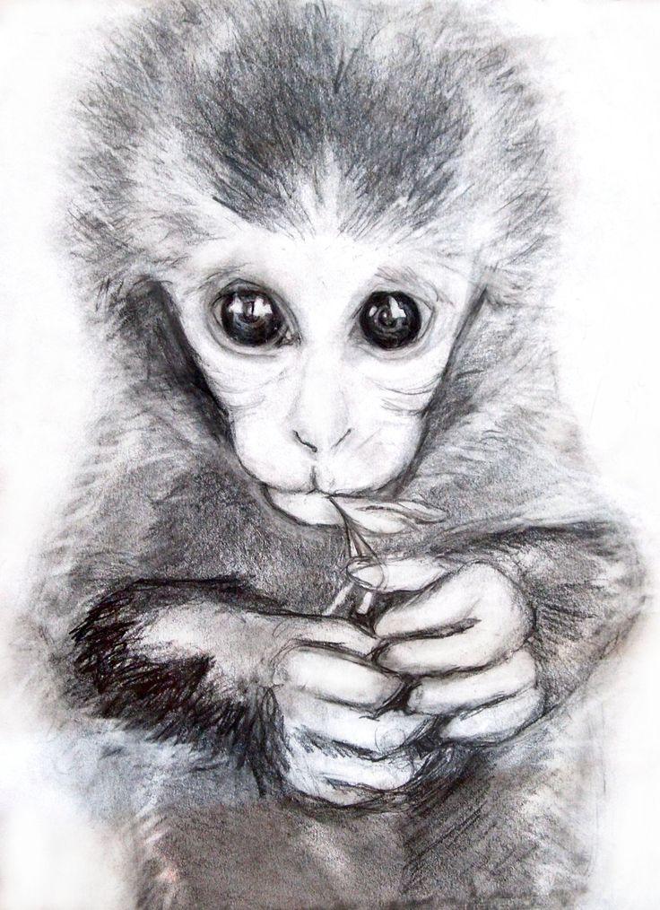 Рисунок обезьяны карандашом