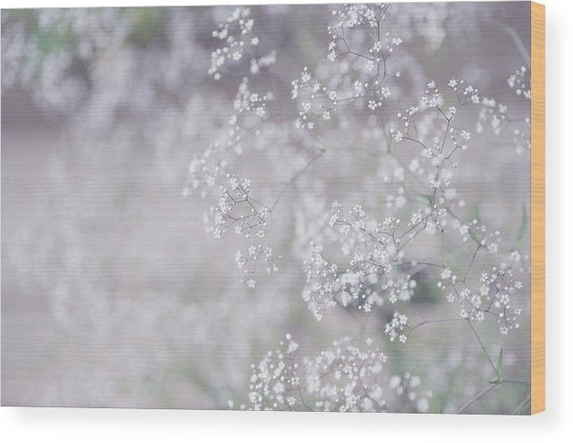 White Dream. Innocence Wood Print by Jenny Rainbow.  All wood prints are professionally printed, packaged, and shipped within 3 - 4 business days and delivered ready-to-hang on your wall. Choose from multiple sizes and mounting options.