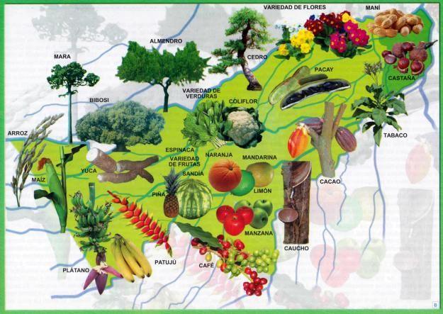 Mapa Flora Del Departamento De Pando Mapas De Bolivia Arbol De