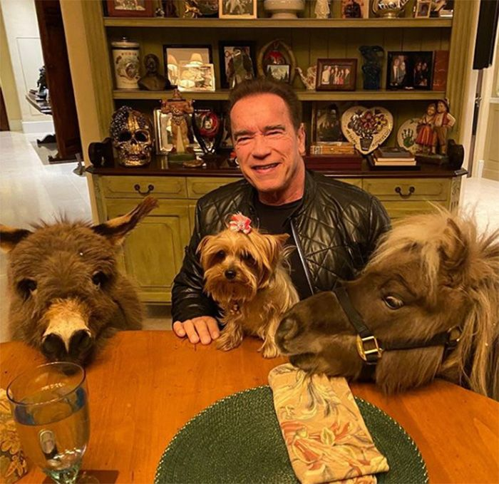 Arnold Schwarzenegger Is Self Isolating With His Dog Pony And Pet Donkey In 2020 Pet Donkey Pet Paradise Arnold Schwarzenegger