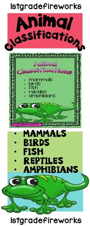 Animal Classification and Writing Mini-Unit. Includes: Cover for Unit folder. Graphic Organizers for writing about each  type of animal. Fill-in charts for use in discussions and/or readings Lined paper for sloppy copies & final drafts.  (Multiple type of papers for many grade levels) Editing Self-check papers.https://www.teacherspayteachers.com/Product/Science-Animal-Classification-602915