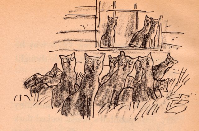 my vintage book collection (in blog form).: One Hundred and One Black Cats - illustrated by Quentin Blake