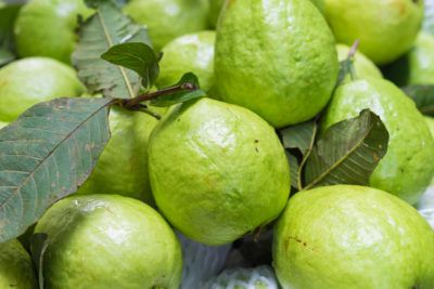 Should I Thin My Guavas – Learn How To Thin Guava Fruit Some gardeners are lucky enough to have a guava tree or two in their backyard. If you're one of those lucky ones, then you're probably wondering how to get the most out of your guava crop. One popular method is thinning. Learn more about this here.