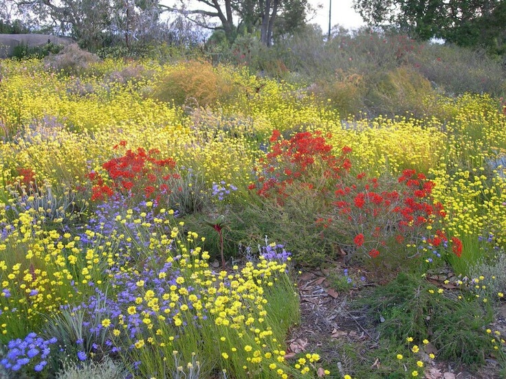 Picture of WILDFLOWERS from AUSTRALIA!!
