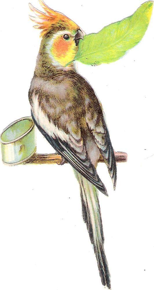 Oblaten Glanzbild scrap diecut chromo Papagei 14,5cm  parrot Kakadul bird oiseau: