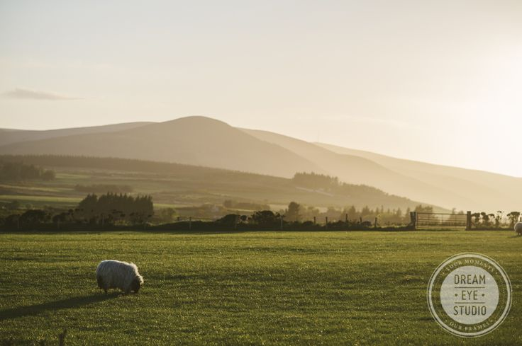 #dreameyestudio #sheep #ireland #fields #beautifulcountry #island