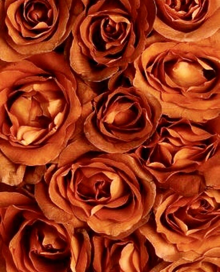 Browse our collection of burnt orange wallpaper templates, icons,. Rust Orange roses   Broken rose, Orange aesthetic, Orange ...