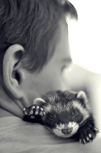 Ferrets are one of the most abandoned pets because people don't do their homework before they adopt them. They take a lot of care, please do your homework before you adopt a ferret...