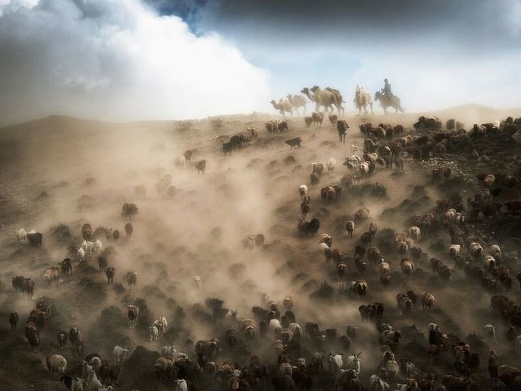 NOVEMBER 30, 2017ON THE MOVE  In far northern Xinjiang, China, herders guide camels, sheep, and cattle to new pastures, where they'll graze during the summer months. Summer in the area is warm, but very dry.  PHOTOGRAPH BY SONGGE CUI,