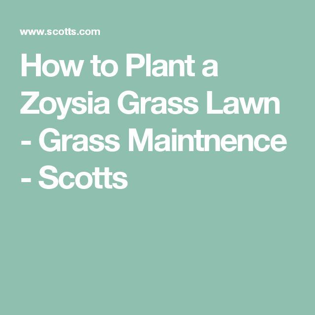 How to Plant a Zoysia Grass Lawn - Grass Maintnence - Scotts