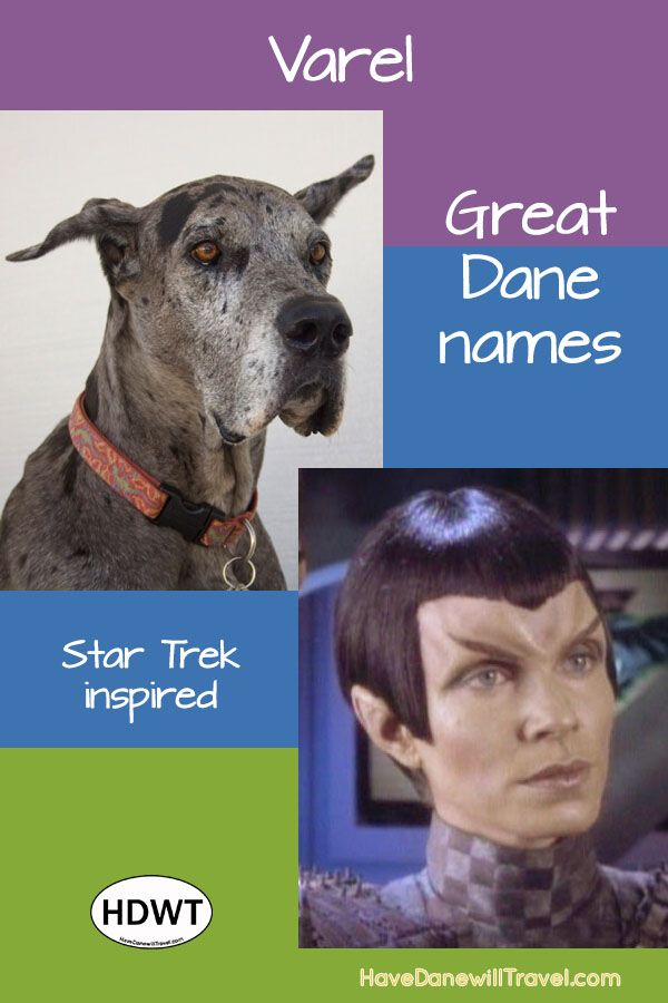 How To Pick A Great Dane Name Great Dane Names Great Dane Puppy