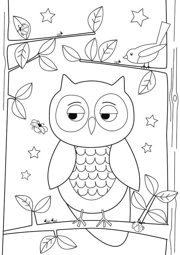 owl drawing simple coloring pages drawings easy draw owls step template designs cool sketch sheet printable colornimbus paper templates patterns