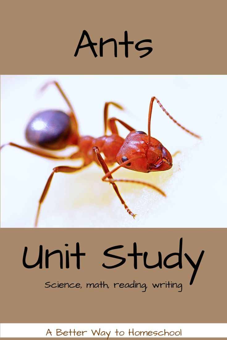 best Homeschool Unit Ants images on Pinterest Ant Ants and