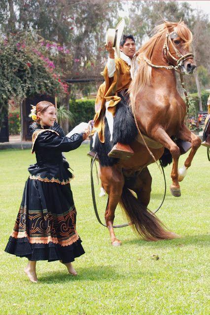 El caballo peruano de paso a ritmo de marinera | Perú  Hermoso espectáculo que conjuga el baile de una danza tradicional como lo es la Marinera y el Caballo de Paso peruano, un animal único entre los equinos que se caracteriza por la elegancia que presenta en su andar, simulando en su caminar una danza.