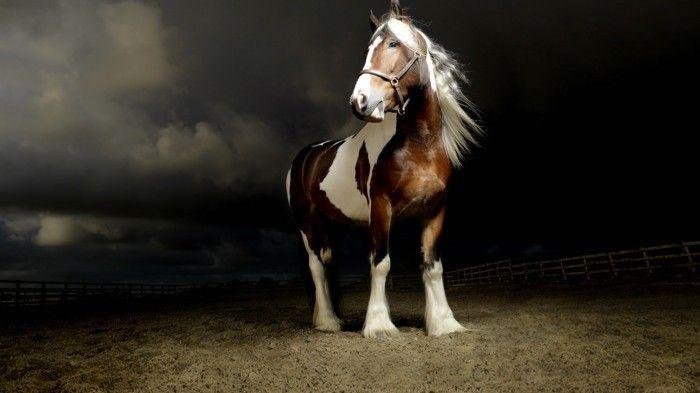 schöne pferde bilder ein starkes pferd