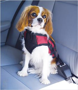 I think our Cavalier King Charles Spaniels need this Seat Belt Safety Harness