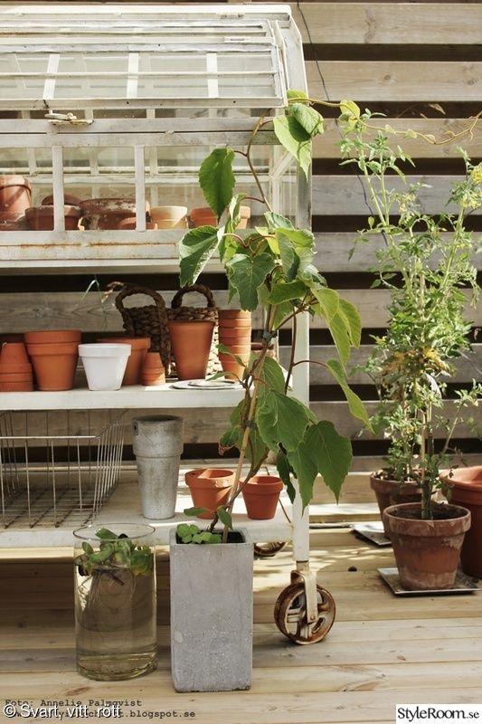 krukor,trädäck,uteplats,altan,tomatplantor