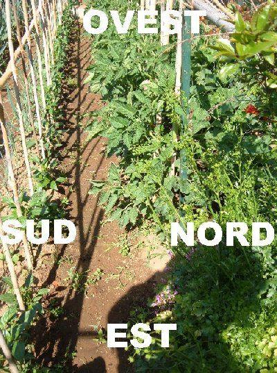 Orientare i filari dell'orto | Coltivare pomodori