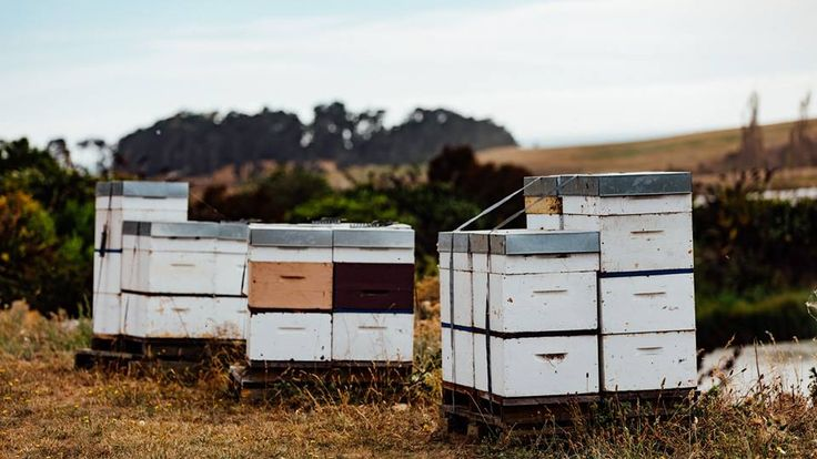 We partner with Watson & Sons who can track and trace every kilogram of honey back to the remotest part of pristine New Zealand bush country from where it came.  Watson & Sons test every batch of honey through an independently accredited laboratory to ensure that every delivery meets and exceeds the many international standards that govern their product.
