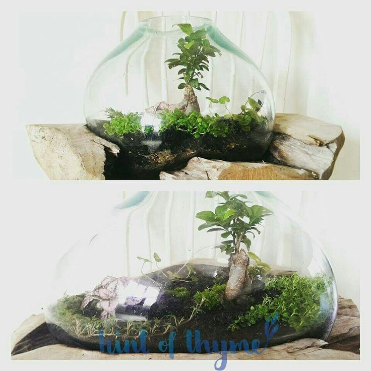 Stunning and massive bonsai terrarium in a huge blown glass bowl. Just love ❤