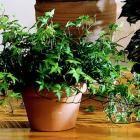 Zimmerpflanzen 20 superleichte Zimmerpflanzen, die Sie lieben werden
