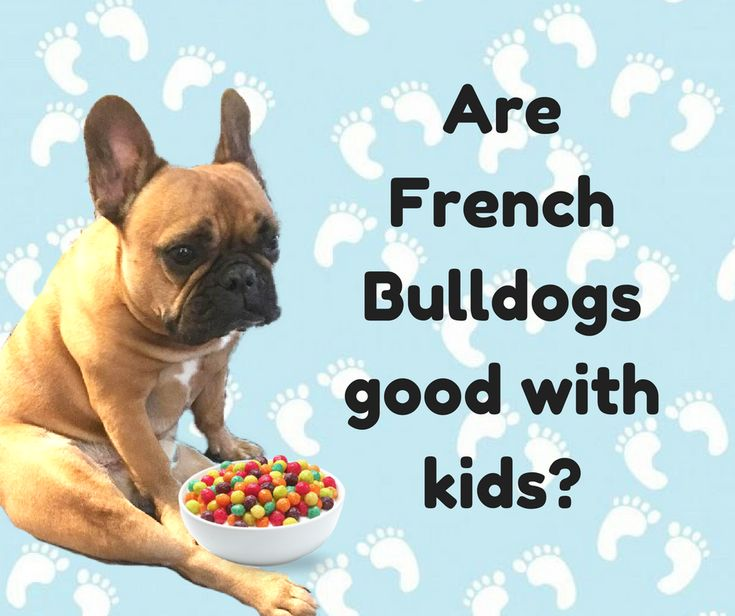 Are French Bulldogs good with kids and do they have a good temperament? Find out here!