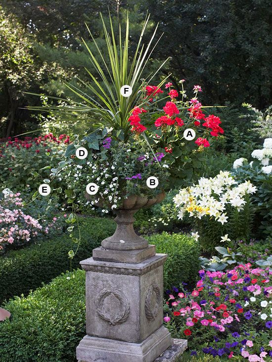 Die 25+ Besten Ideen Zu Dracenas Auf Pinterest | Xeriscaping ... Blumen Behaltern Zu Hause