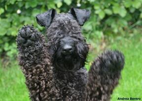 Best Odourless Dog Breeds