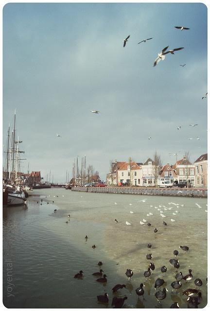 Harlingen, Fryslân (Province of Friesland), The Netherlands. #greetingsfromnl