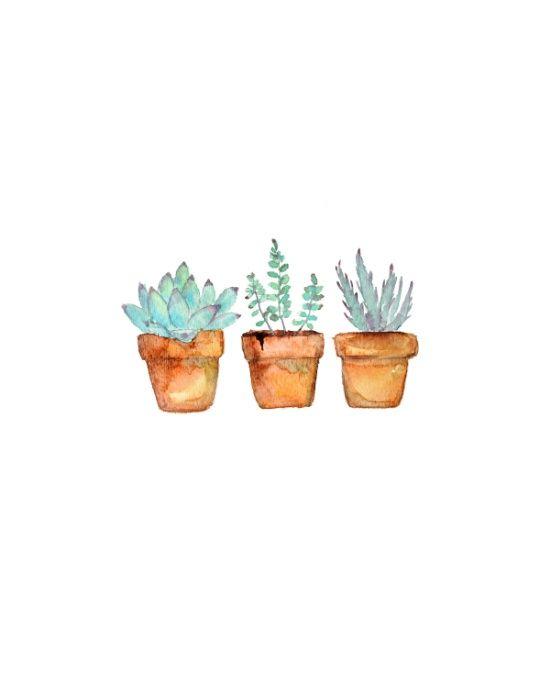 - Vasinhos  de suculentas -