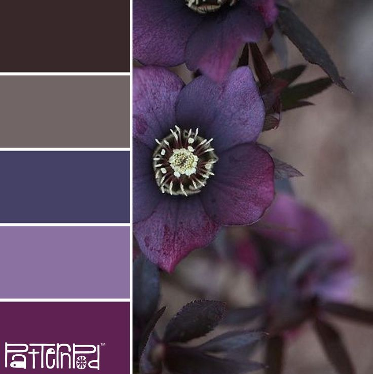 Color Palettes Inspired by Nature - PatternPod.com: