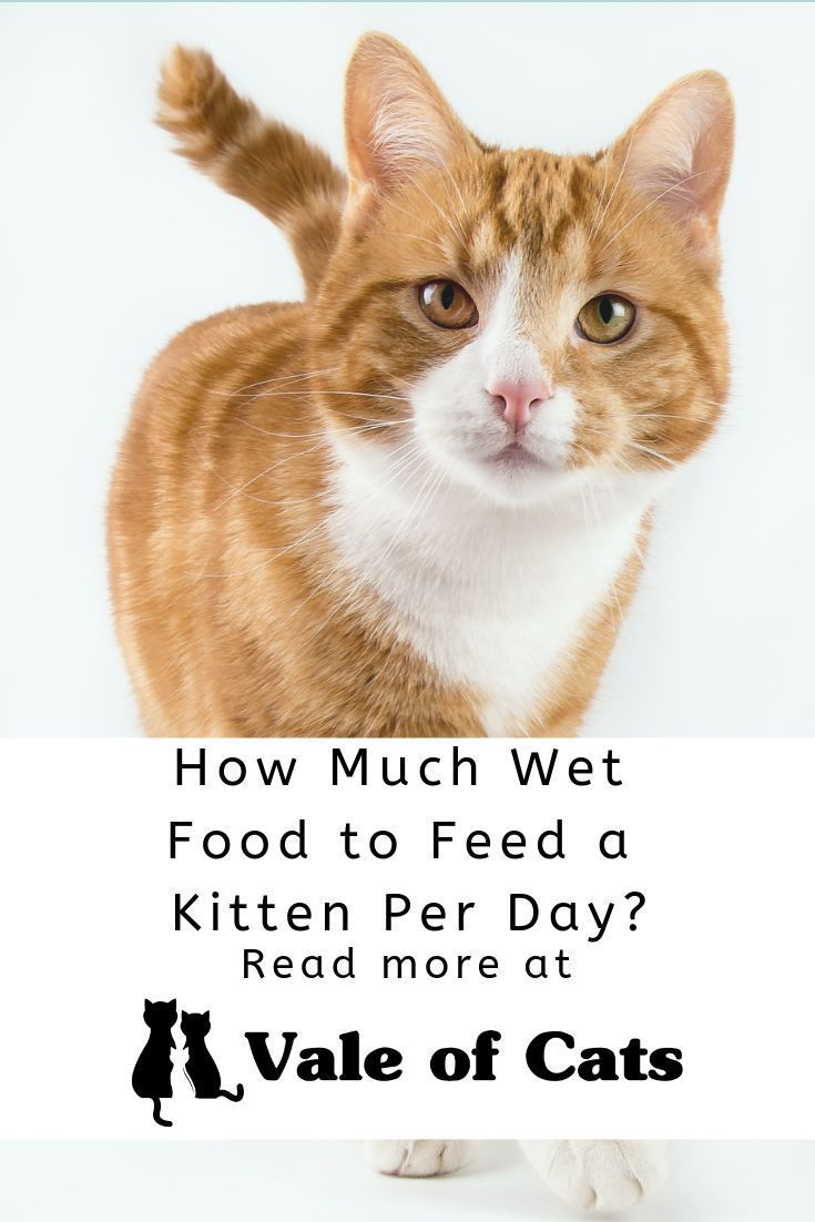 How Much Wet Food To Feed A Kitten Per Day Cats Smelling Large Cat Breeds Small Cat Breeds