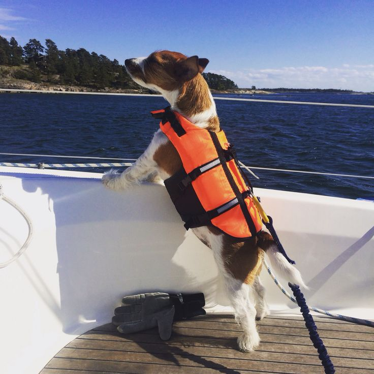 Captain Jack Russell sees land ahead