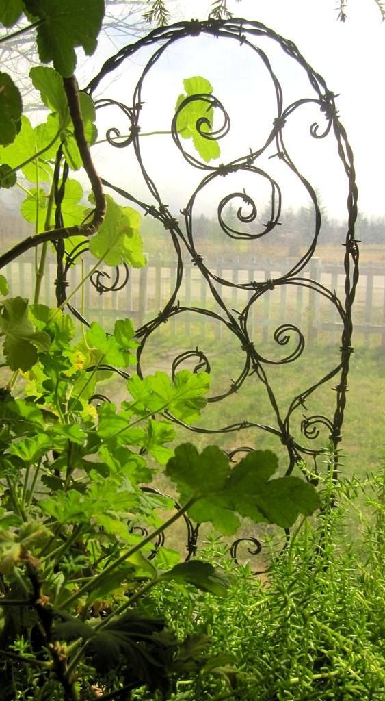 rusty barbed wire trellis