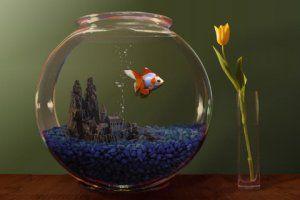 Goldfish Slots, free, play Real Money Casino Slots