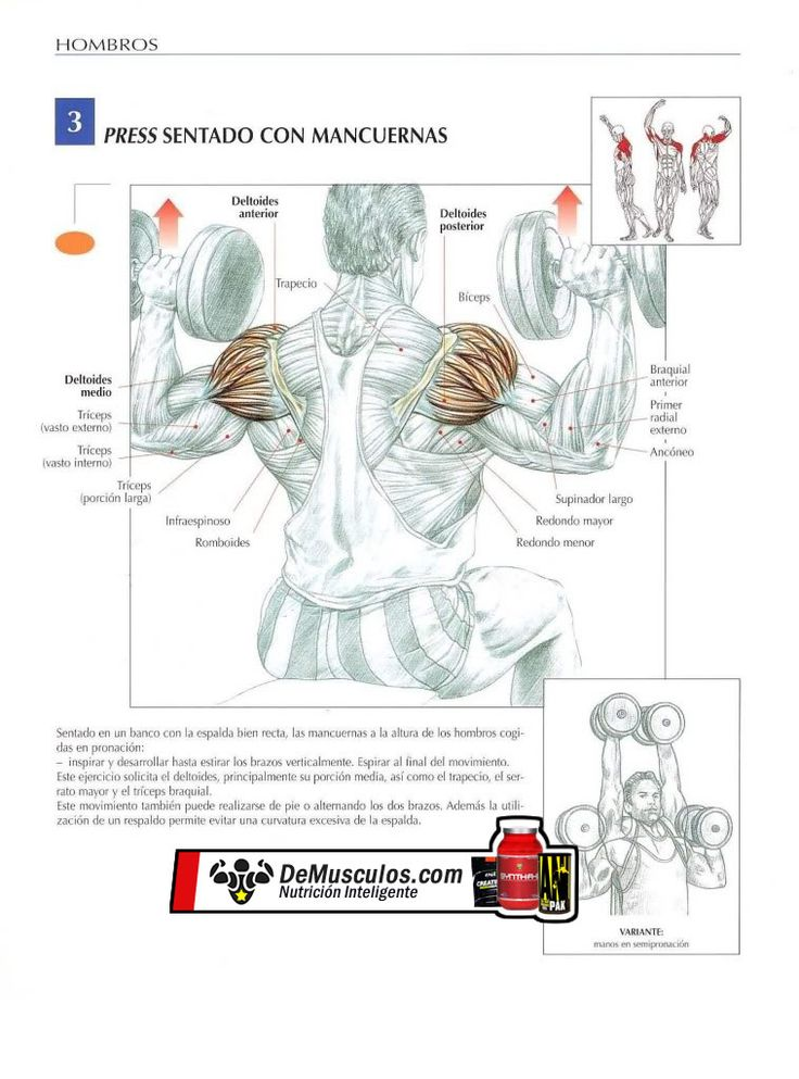 38 best musculacion images on pinterest life drawing for Posters para gimnasios