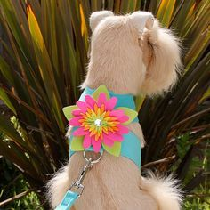 Susan Lanci Island Flower Dog Harness at GlamourMutt.com