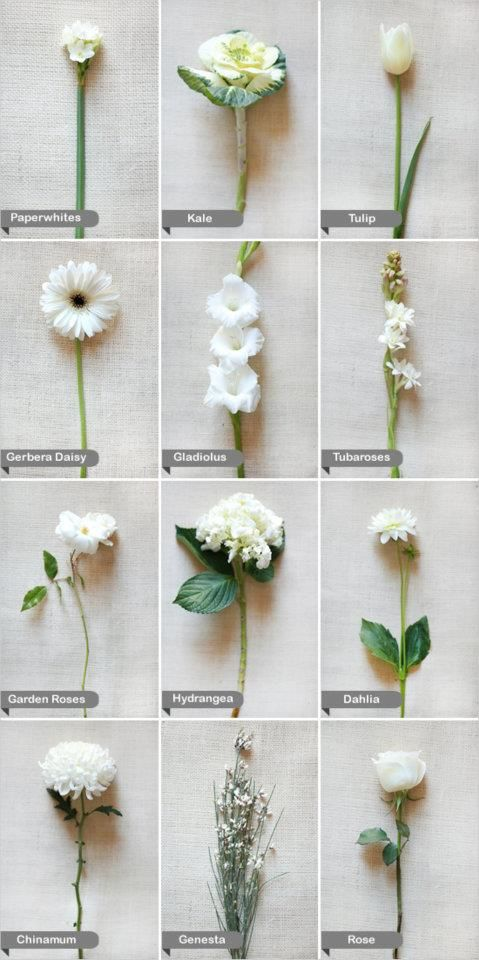 (Shown: white wedding flowers :). Great for IDing all those flowers you love but never know the names of)