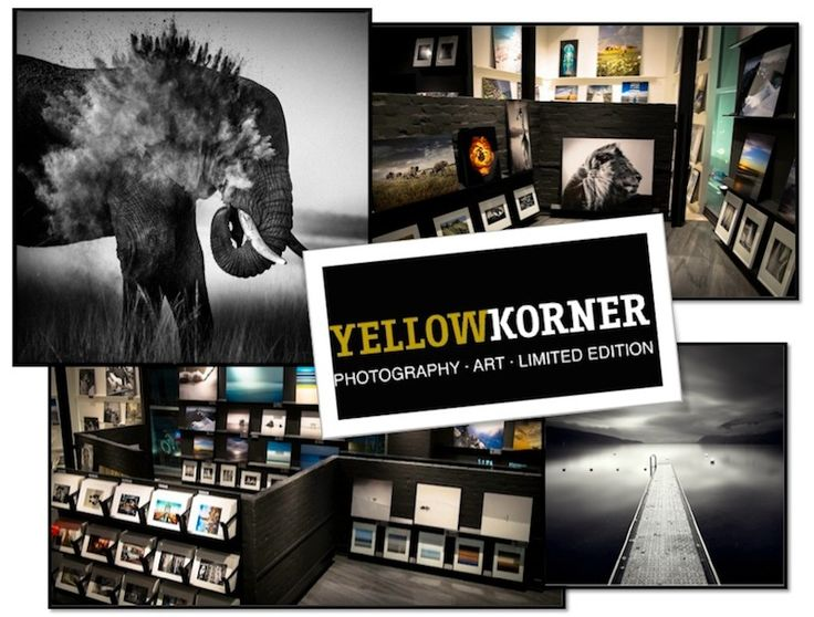 Yellow Korner: Bondi Junction