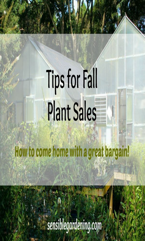 Tips for Fall Plant Sales with Sensible Gardening