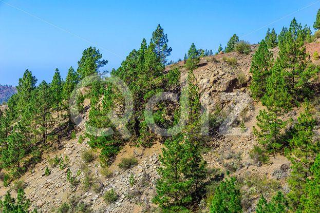 Qdiz Stock Photos Fir Trees on Mountain Landscape