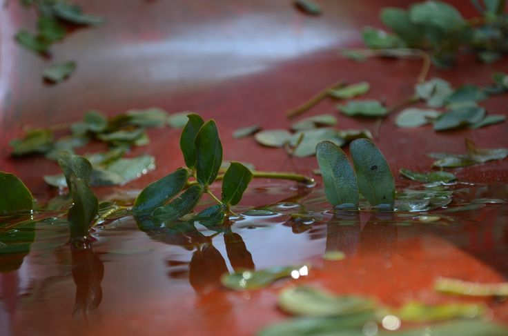 Green leaves on red... by Alex Davidovich